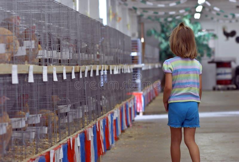 Download Fille et poules photo stock. Image du ferme, choisissez - 739126