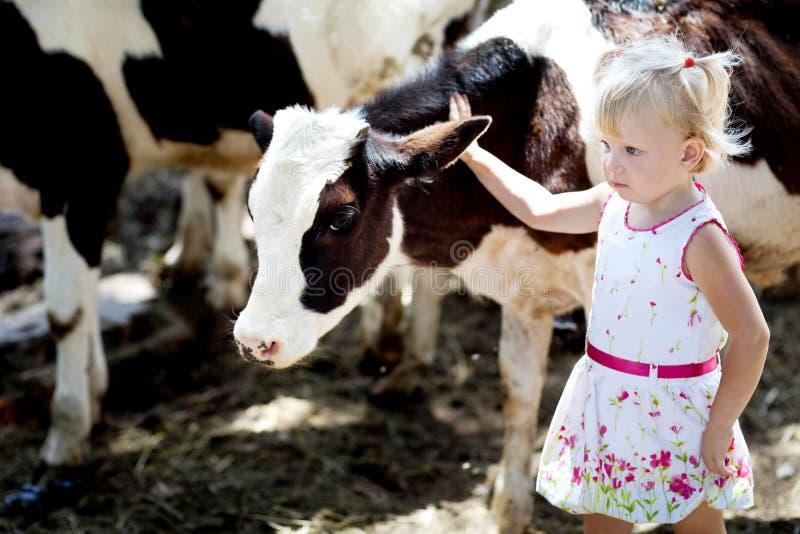Fille et une vache image stock