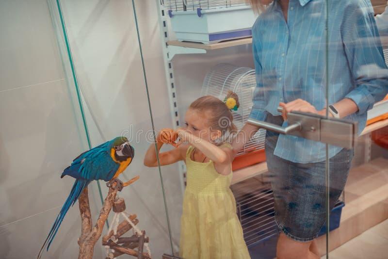 Fille mignonne portant le sentiment jaune de robe stupéfait regardant le perroquet photo stock