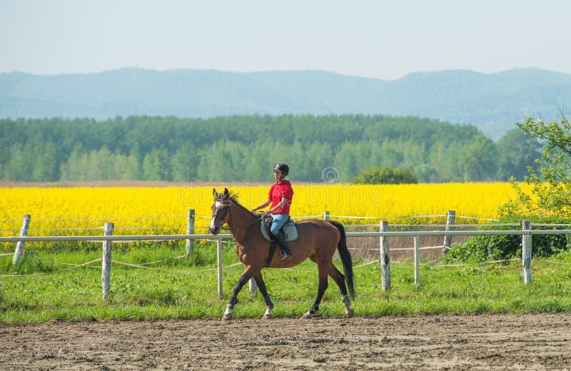 Fille montant un cheval photo stock