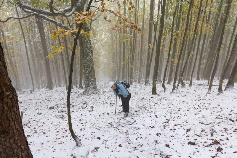 Fille montant une traînée neigeuse de forêt photo stock