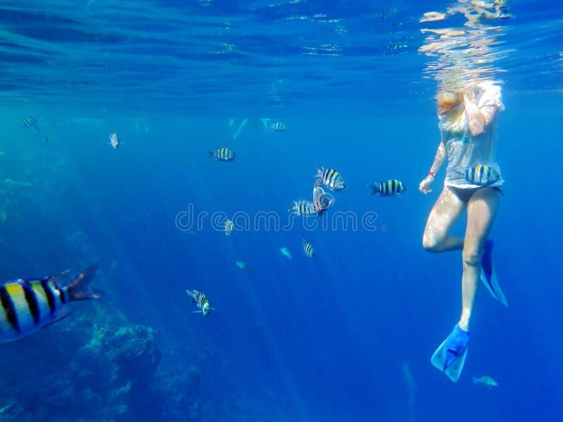 Fille naviguant au schnorchel parmi des poissons images stock