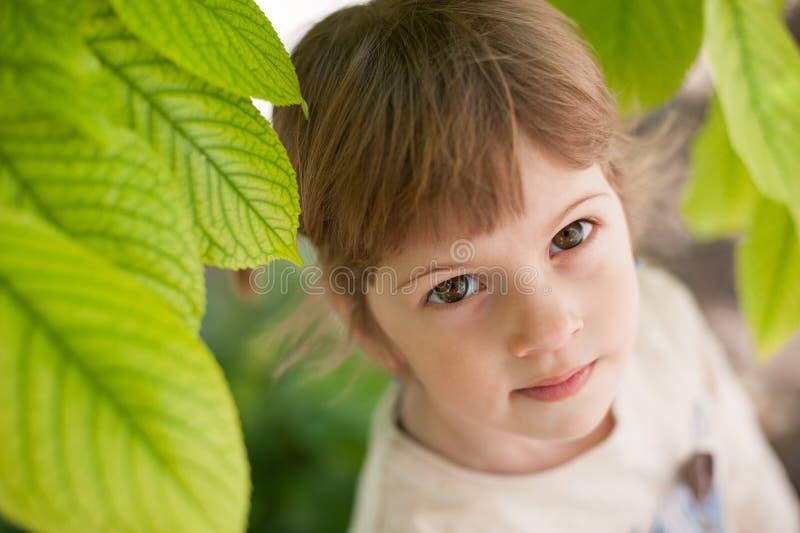 Fille, peu, enfant, feuilles, feuille, arbre, vert, nature, environnement, beau, portrait, eco photo stock