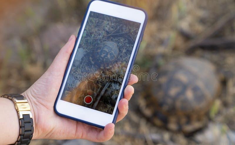Fille prenant la photo de la tortue par le téléphone portable, smartphone photographie stock