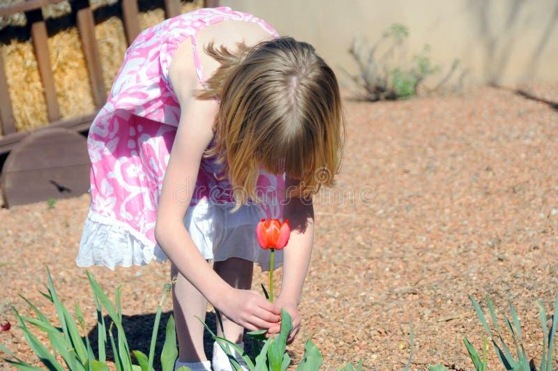 Fille sélectionnant une tulipe image libre de droits