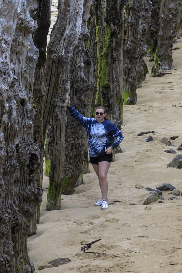 Fille se reposant sur le brise-lames en bois images stock