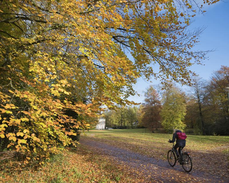 Fille sur la bicyclette en parc d'automne sur le heuvelrug d'utrechtse en Hollande photos libres de droits