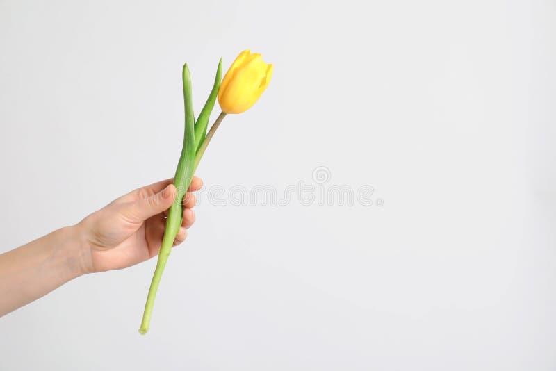 Fille tenant la belle tulipe de ressort sur le fond clair Jour international du ` s de femmes image stock
