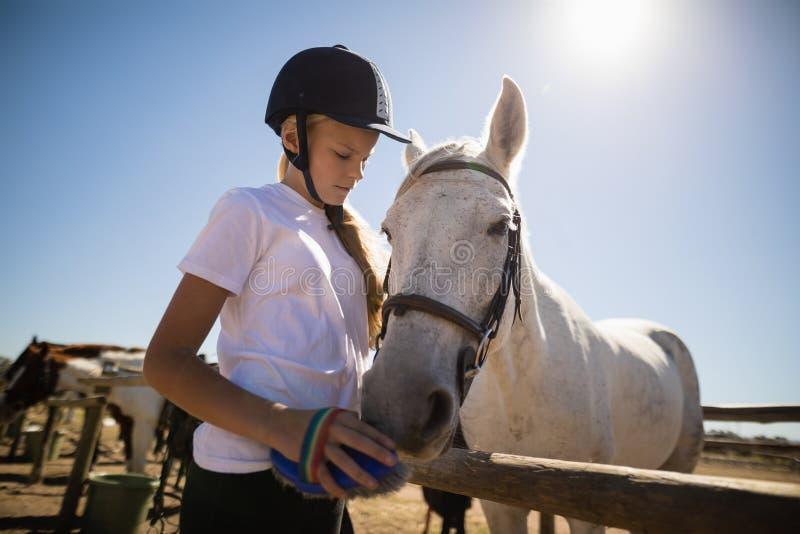 Fille toilettant le cheval dans le ranch photo stock