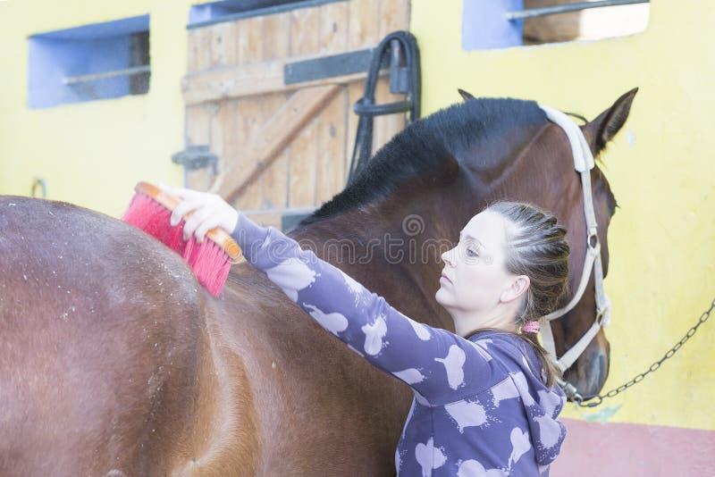 Fille toilettant un cheval images libres de droits