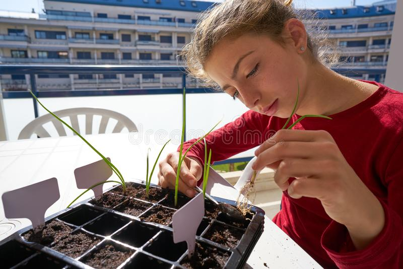 Fille travaillant sur la tâche de jeune plante extérieure photos libres de droits