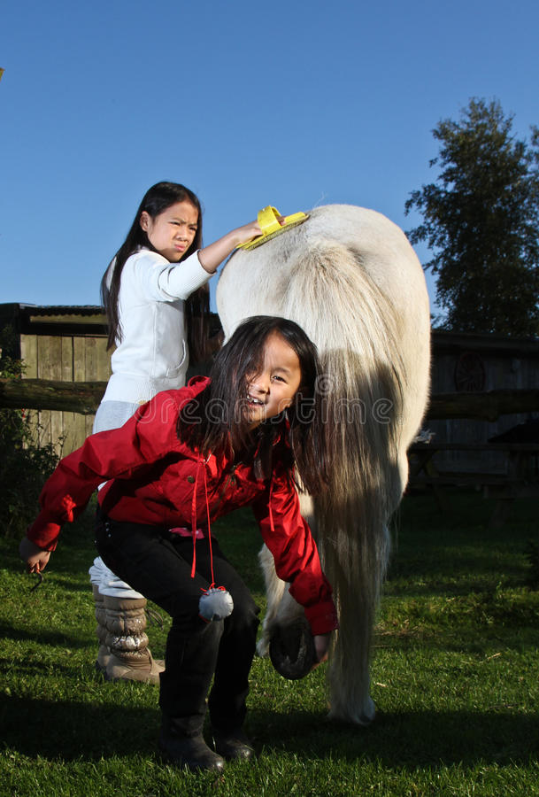 Filles toilettant le cheval d'af image stock