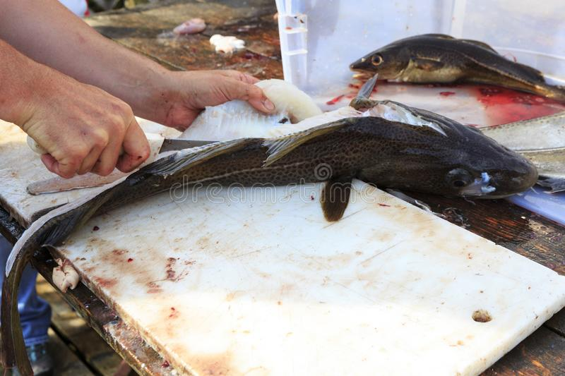 Filleting of cod fish. In the seafood market royalty free stock image