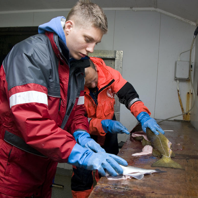 Filleting fish. A teenage boy and man filleting fish on a wood table stock photo