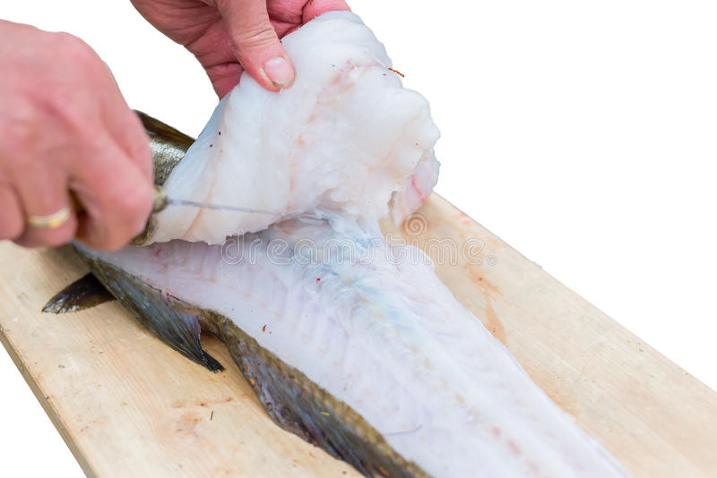 Filleting Fish stock photography