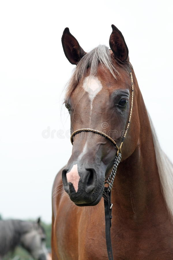 Download Filly Stock Photos - Image: 15876863
