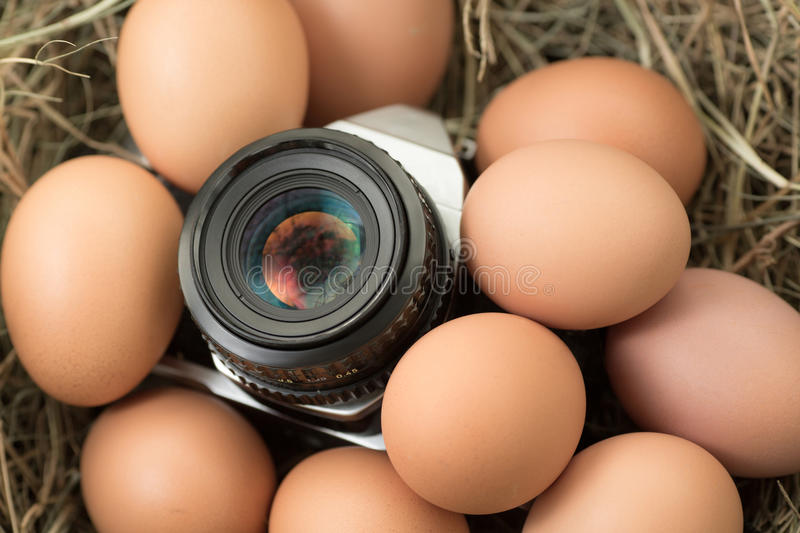 Film camera with eggs. To view the exotic stock image