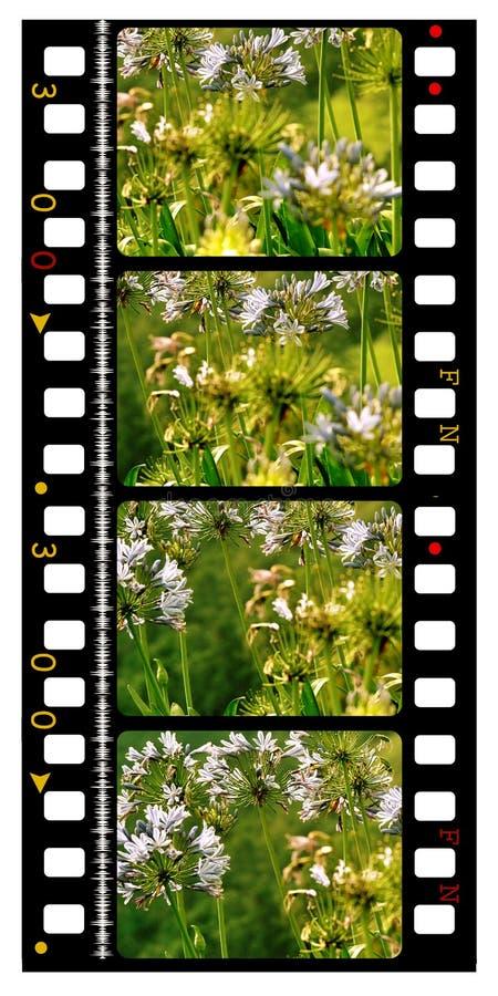 film de film de couleur de 35mm illustration de vecteur