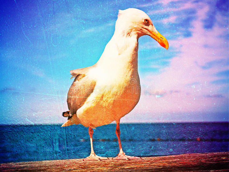 Film effect. Close seagull stay on wooden handrail. Big bird looking into camera. Film grain effect. Close seagull stay on wooden handrail. Big bird looking into stock photos