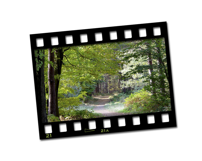 Film strip photo. Showing a pathway through woods royalty free illustration