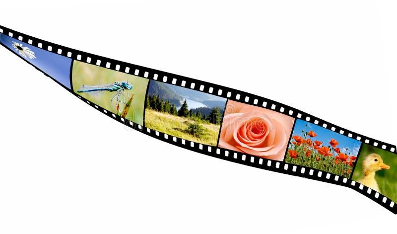 Filma remsan arkivbilder