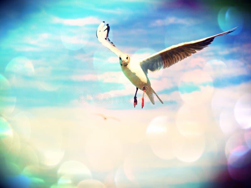 Filmeffect Vrije vlucht De wilde vliegen van de zeemeeuwvogel en het onderzoeken van camera Blauwe hemel over het overzees stock fotografie