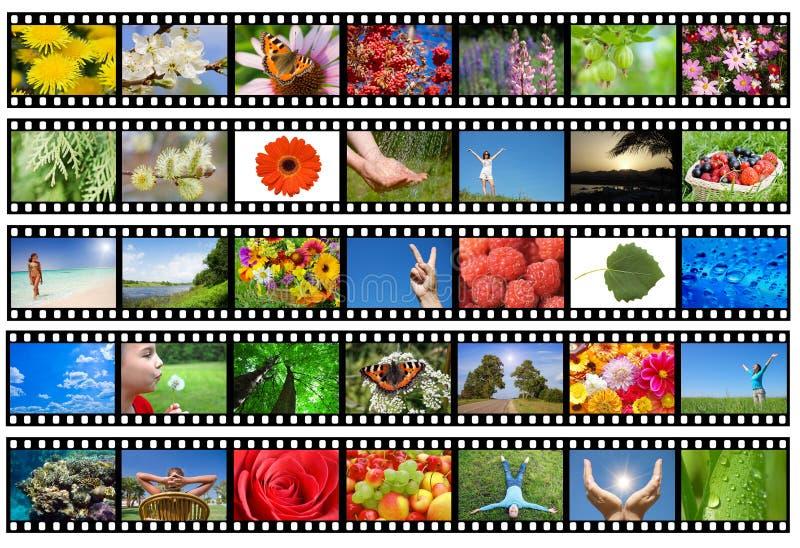 Filmen Sie Streifen mit verschiedenen Fotos - Leben und Natur stockbild
