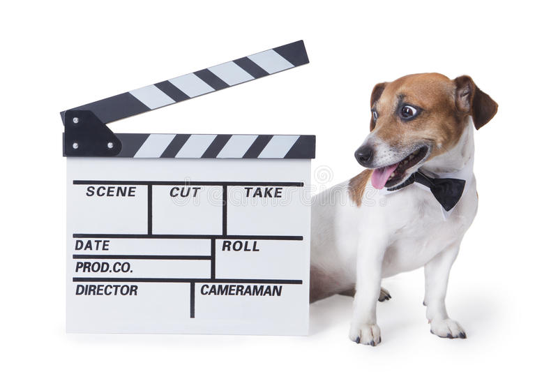 Filmhund lizenzfreie stockfotos