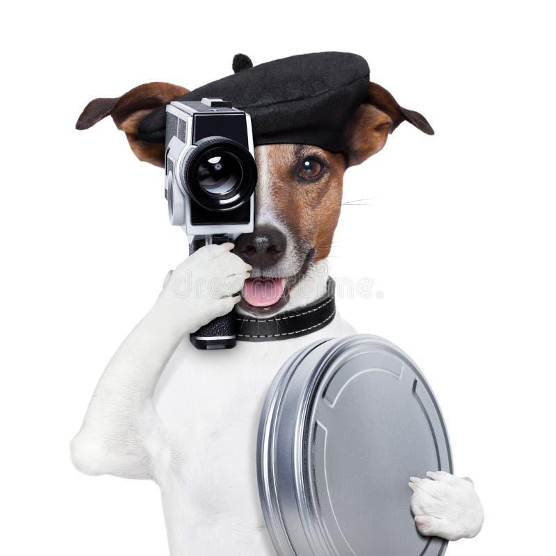 Filmregisseurhund stockbilder