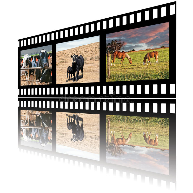 Filmstrip Of Domestic Farm Animals Royalty Free Stock Photos