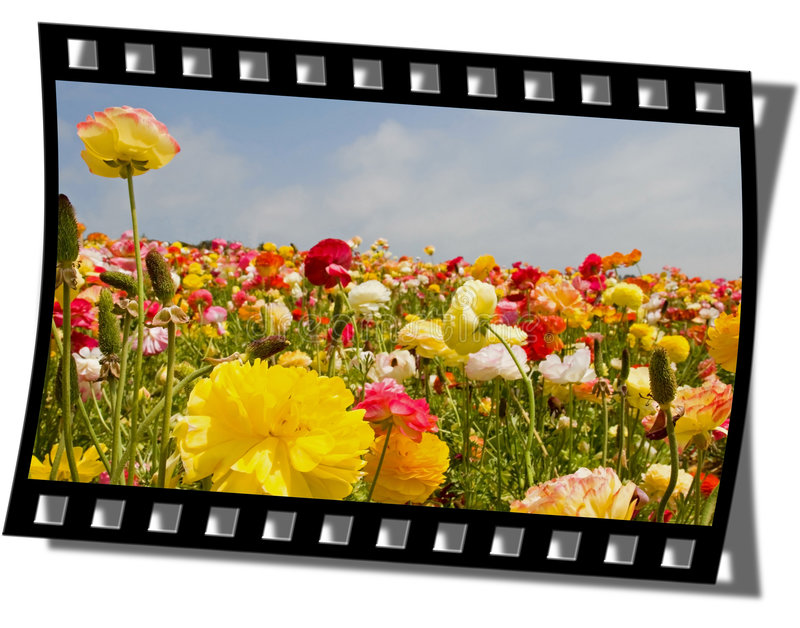 Filmstrip Frame. Cut piece of filmstrip of a travel movie on a developed negative curled at the edges royalty free stock images
