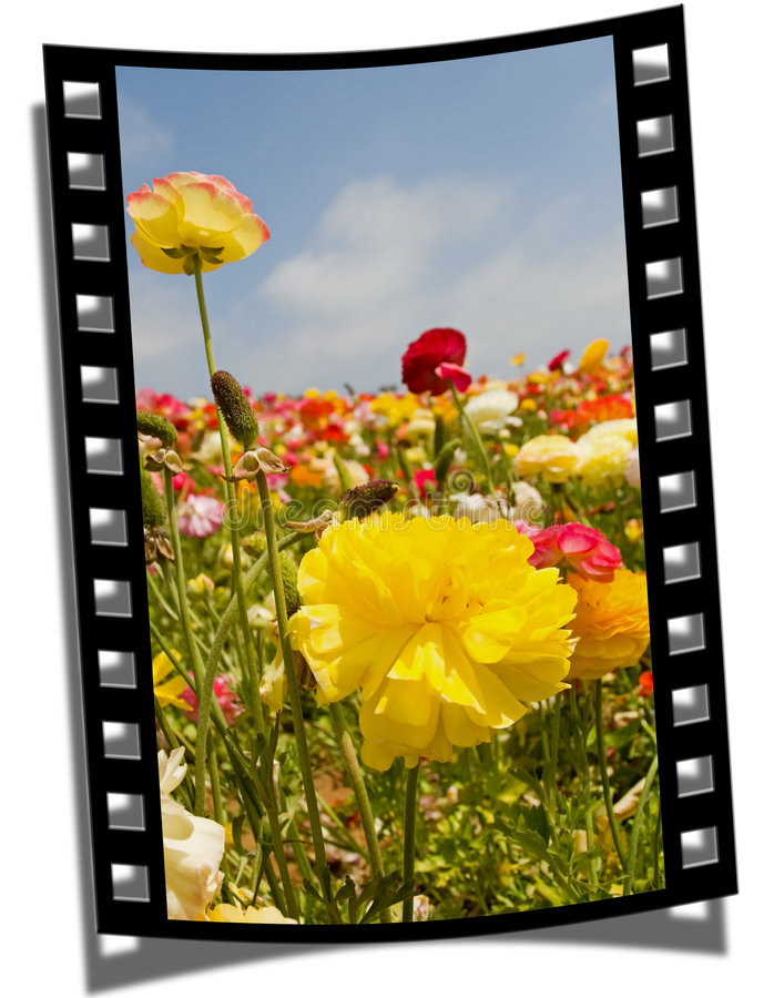 Filmstrip Frame. Cut piece of filmstrip of a travel movie on a developed negative curled at the edges royalty free stock photo