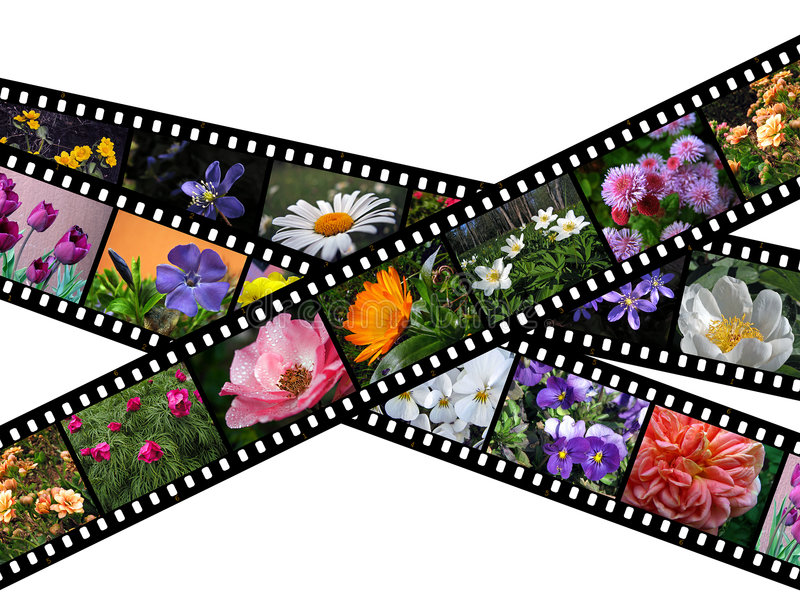 filmstripblommaillustration vektor illustrationer