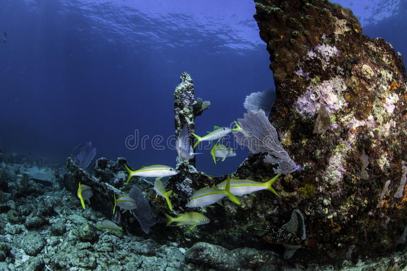 Filones coralinos norteamericanos foto de archivo libre de regalías