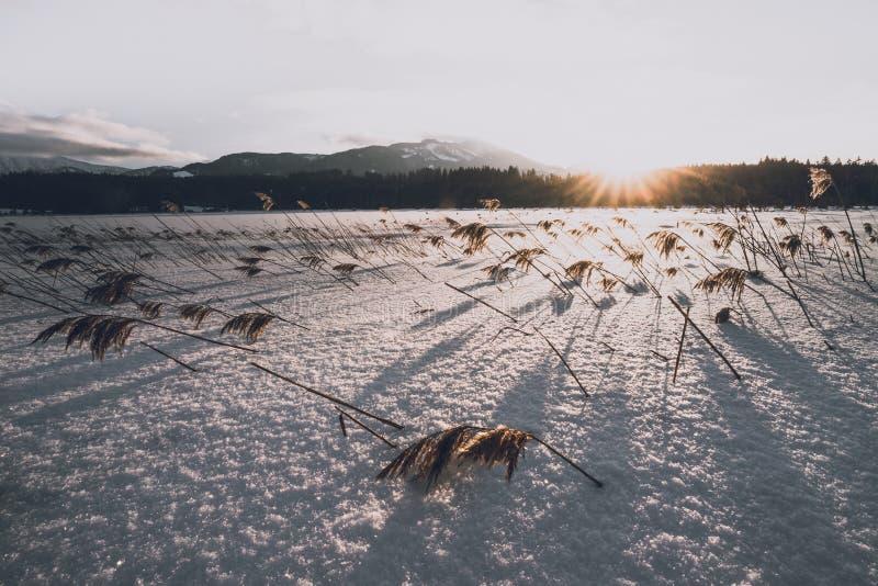 Filones en la nieve imagen de archivo