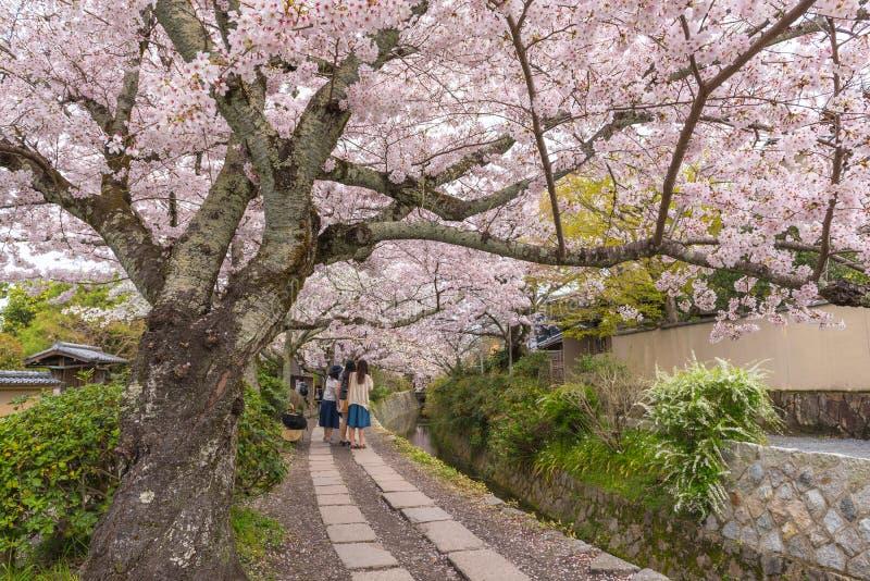 Filozofa ` s spacer z Sakura czereśniowym okwitnięciem w Springtim obrazy stock