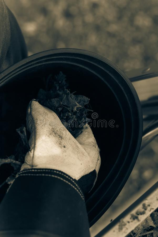 Filtered image close-up hand with gloves drop dried leaves and dirt into bucket from gutter cleaning. Vintage tone top view man hand in gloves holding dried stock images