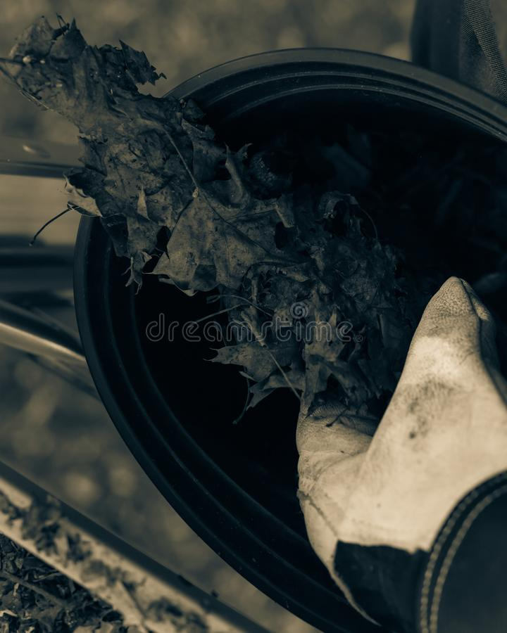 Filtered image close-up hand with gloves drop dried leaves and dirt into bucket from gutter cleaning. Vintage tone top view man hand in gloves holding dried stock image