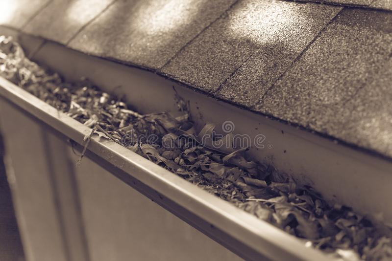 Filtered image gutter clogged by dried leaves and messy dirt need clean-up. Vintage tone gutter near roof shingles of residential house full of dried leaves and stock image