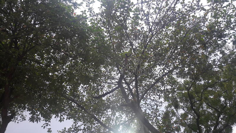 Filtered sunlight. Sunlight filtered through canopy of green trees touching the ground.in scientific language this is called tyndall effect but for us this is stock photos