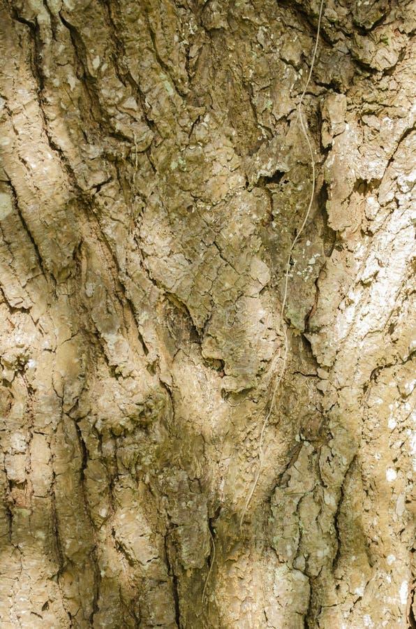 Filtrerat solbelyst trädskäll arkivbilder