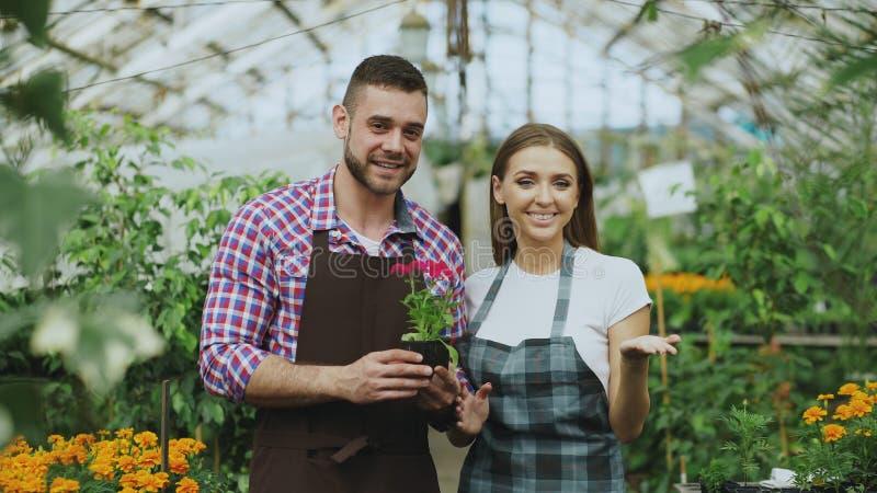 Filtrez le tir de jeunes jardiniers de sourire de couples de blogger dans le tablier tenant la fleur parlant et de blog visuel de photo libre de droits