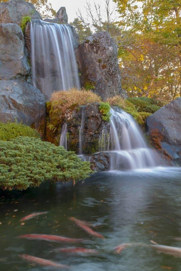 Fim acima da cachoeira e da folha bonitas da cor da mudança da floresta no outono em japão imagens de stock