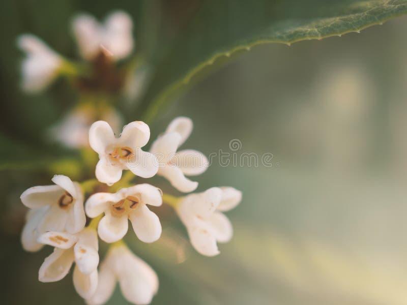 Fim acima da flor branca do ramalhete fotografia de stock