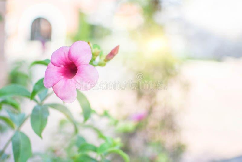 Fim acima da flor branca, da paisagem natural das plantas da flor usando-se como um fundo ou do papel de parede fotos de stock royalty free