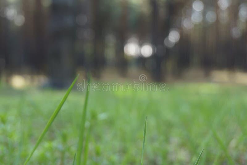 Fim acima da paisagem da natureza da mola A floresta mo?da borrou o espa?o da c?pia do fundo da natureza fim acima da grama na fl fotografia de stock royalty free