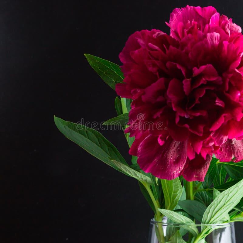 Fim acima da peônia de Borgonha em um vaso de vidro em um fundo preto fotografia de stock royalty free