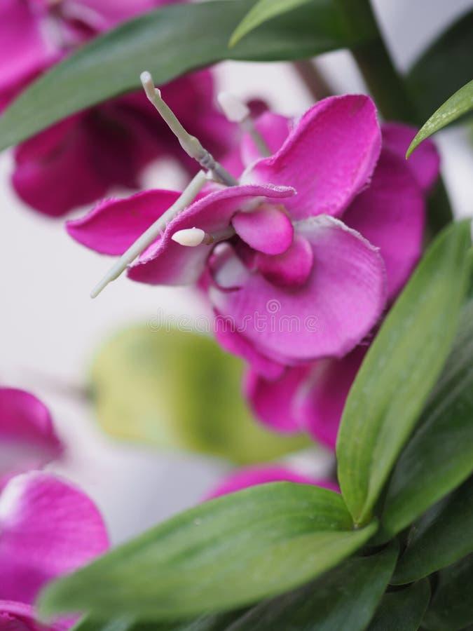 Fim acima das flores artificiais da flor bonita roxa do ramalhete da orquídea fotografia de stock royalty free