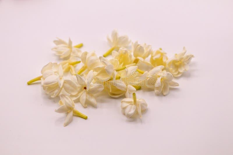 Fim acima das flores do jasmim do foco seletivo no isolado no fundo branco fotos de stock royalty free