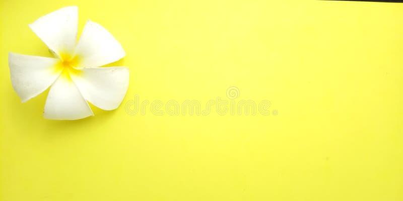 Fim acima do fundo amarelo com Frangipani, projeto do elemento para a mensagem, citações, colocação do texto de informação foto de stock